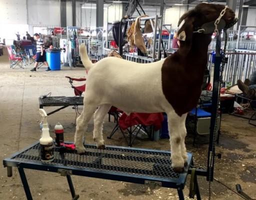 Shop Goat Products